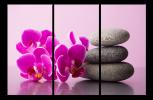 Obraz Orchideje a kameny