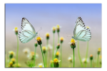 Obraz 2 motýli