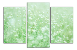 Obraz Květy na louce