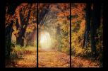 Obraz Cesta v lese