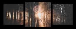 Obraz Slunce v lese