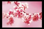 Obraz Červené květy