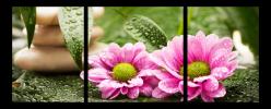 Obraz Květy a zen kameny