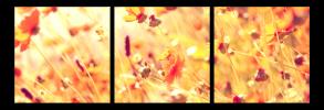 Obraz Luční květy