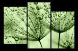 Obraz Zelené pampelišky