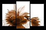 Obraz Květ