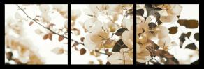 Obraz Hnědé květy