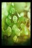 Obraz Detail rostliny