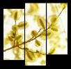 Obraz Rozkvetlá větev