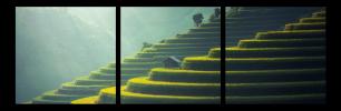 Obraz Ryžové pole