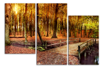 Obraz Most v lesu