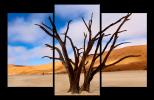 Obraz Stromy na poušti