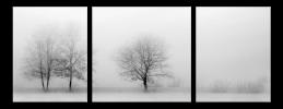 Obraz Stromy v zimě