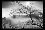 Obraz Strom a hory