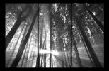 Obraz Stromy v lese