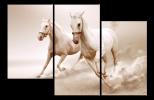 Obraz Koně