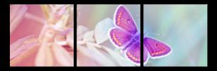 Obraz Motýl