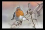 Obraz Ptáček