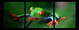 Obraz Žabka