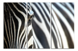 Obraz Zebry