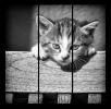 Obraz Kotě