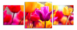 Obraz Tulipány panorama