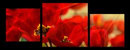 Obraz Tulipány