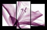 Obraz Tulipán