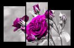 Obraz Fialová růže