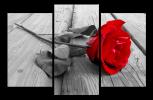 Obraz Rudá růže