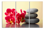 Obraz Orchidej a zen kameny