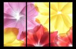 Obraz Barevné květy