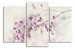 Obraz Detail květu