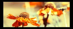 Obraz Květy