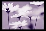 Obraz Květy detail