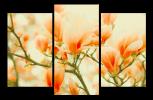 Obraz Oranžové magnolie