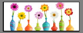 Obrazy harmonie květů 1009