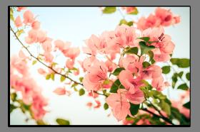 Obrazy různý květy 1012