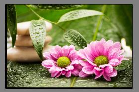 Obrazy různý květy 1013