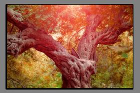 Obrazy stromy 1021