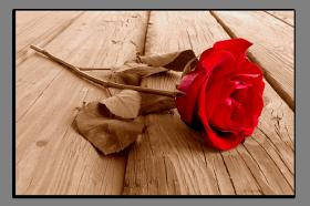 Obrazy romantika 1029