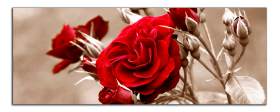 Obrazy růže 1030