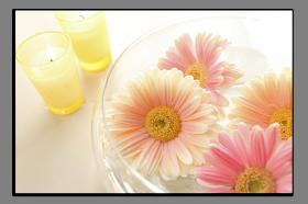 Obrazy různý květy 1032