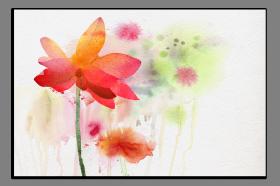 Obrazy různý květy 1035