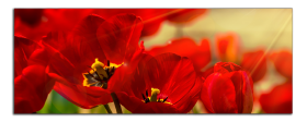 Obrazy tulipány 1040