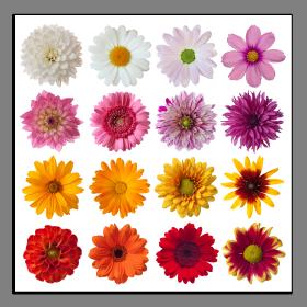 Obrazy různý květy 1042
