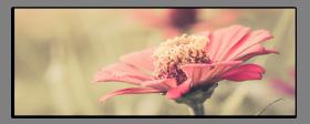 Obrazy různý květy 1043