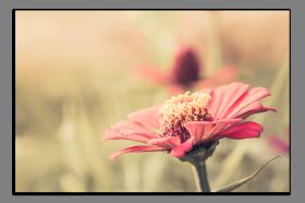 Obrazy různý květy 1044