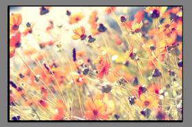 Obrazy různý květy 1050