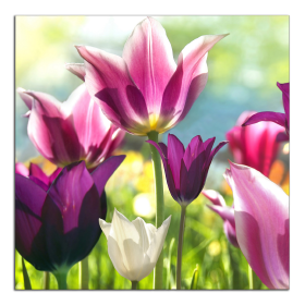 Obrazy tulipány 1051